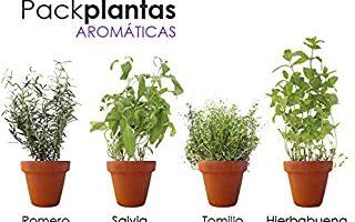 PACK PLANTAS AROMÁTICAS