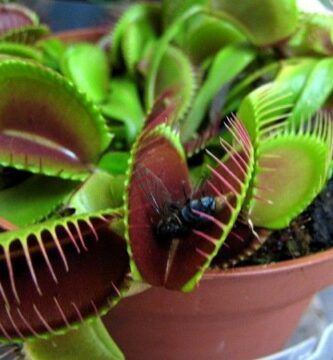 cuidados plantas carnivoras