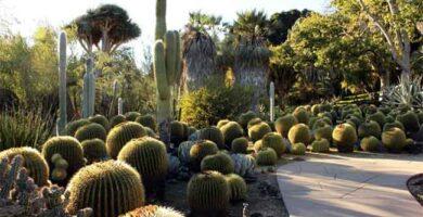 jardín de plantas xerófilas