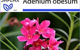 COMPRAR SEMILLAS DE ADENIUM OBESUM