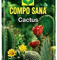 COMPRAR SUBSTRACTO SUCULENTAS Y CACTUS