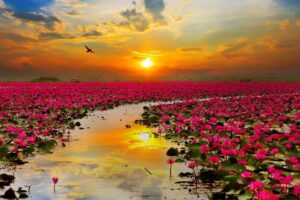 plantas de flores acuáticas