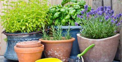 Plantas para alejar los mosquitos