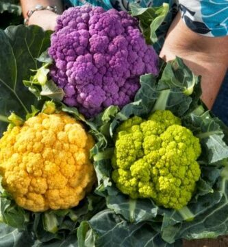 coliflores de colores