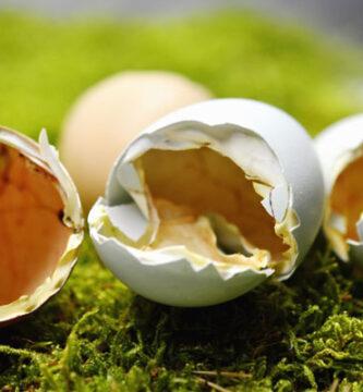 té de cáscara de huevo para plantas