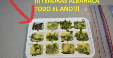 conservar albahaca en aceite de oliva
