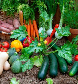 que sembrar en octubre en el huerto en el hemisferio sur