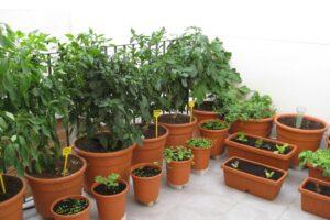 huerto ecológico en macetas